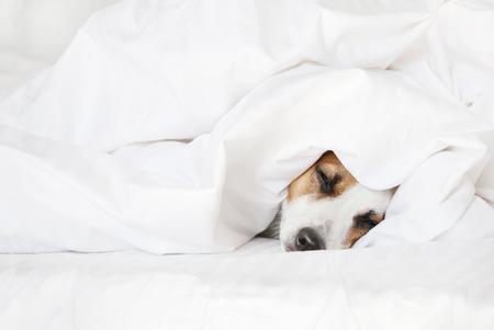 Sleeping dog at bed. Pet at home