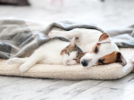 Cat and dog sleeping. Pets sleeping embracing 스톡 콘텐츠