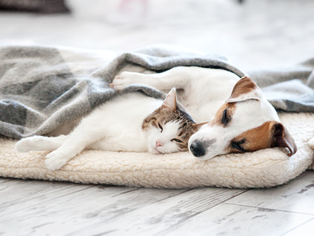 Cat and dog sleeping. Pets sleeping embracing Standard-Bild