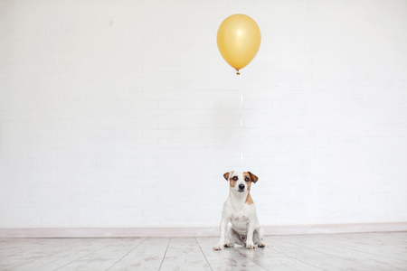 Dog with a balloon. Pet holiday. Birthday