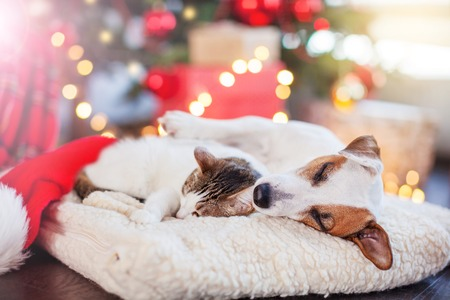 Cat and dog sleeping under christmas tree