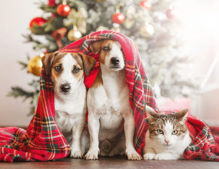 Cat and dog near christmas tree Banque d'images