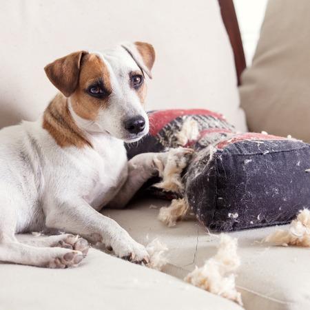 Mimos al perro en casa Foto de archivo