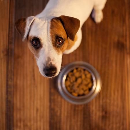 Mascota comiendo comida
