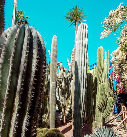 Majorelle Garden is a botanical ,tropical garden and artists landscape garden in Marrakech, Morocco. Majorelle Blue