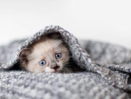 Kitten on a white knitted blanket. Little cut cat at home Foto de archivo
