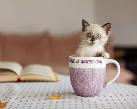 Cut kitten in cup at home. Cat at comfort home. Autumn, fall