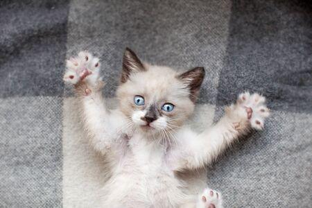 Kitten on a gray knitted blanket. Little cut cat at home Stok Fotoğraf