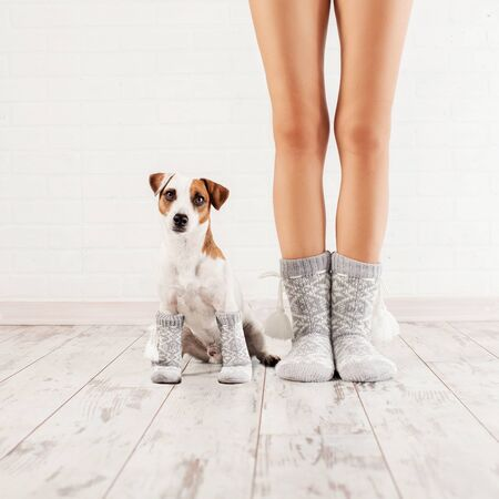 Female and dog in socks. Warm clothing family home