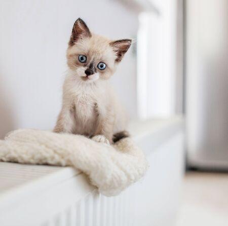 Cut cat on radiator. Kitten on heater