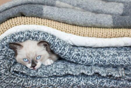 Kitten on a knitted blanket. Little cut cat at home Stok Fotoğraf