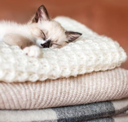 Cat relaxing on knitted plaid. Autumn or winter concept. Lifestyle details in home interior of living room 版權商用圖片