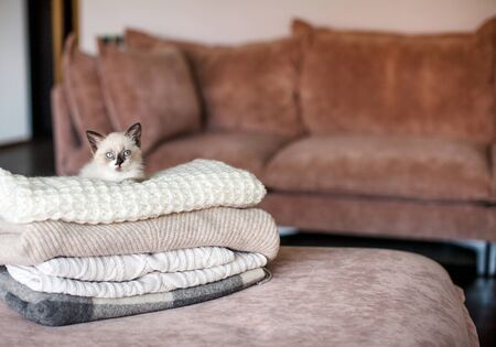 Cat relaxing on knitted plaid. Autumn or winter concept. Lifestyle details in home interior of living room Reklamní fotografie