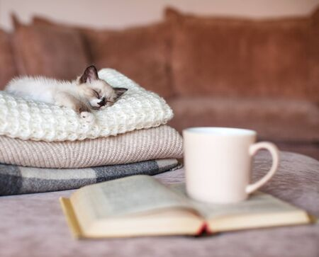 Cat relaxing on knitted plaid near book and cup of tea. Autumn or winter concept. Lifestyle details in home interior of living room