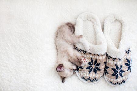 Kitten sleep on plaid near home slippers. Little cut cat at home