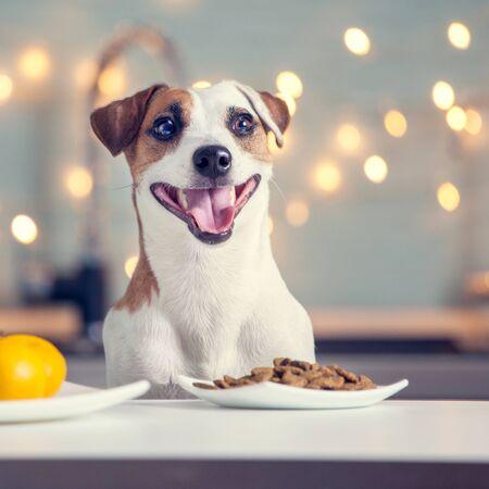 Hund, der zu Hause Nahrung isst. Glücklicher Haustierweihnachtsmann Standard-Bild