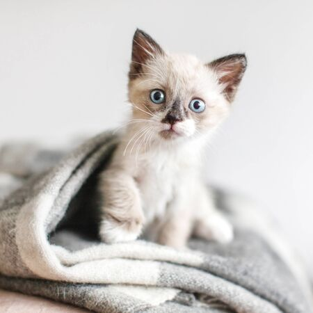 Cat on a white knitted blanket. Little cut kitten at home Stock Photo