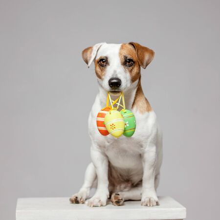 Dog with Easter egg. Happy pet Imagens