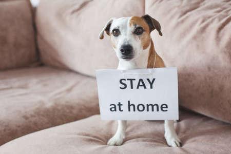 Cute dog at home with blank card. Pet at room during pandemic coronavirus Zdjęcie Seryjne