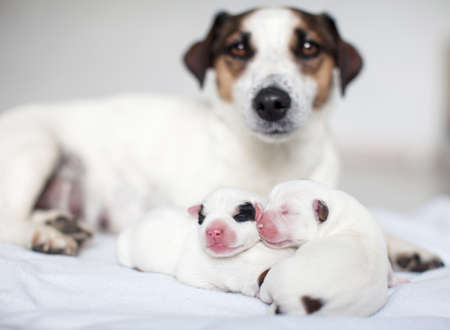 Newborn puppy with mother dog on white bed