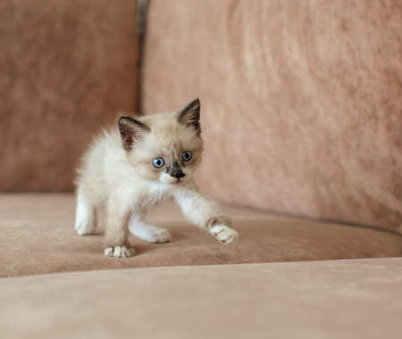 Kitten is on the sofa. Cat at home