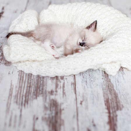 Kitten sleep on knitted plaid. Little cut cat sleep on wooden floor