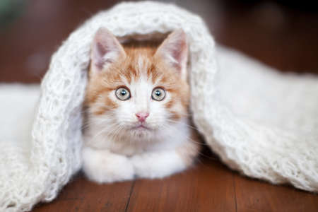 Kitten on a white knitted blanket. Little cut cat at home Zdjęcie Seryjne