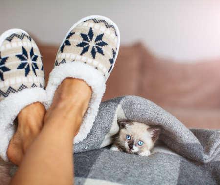 Slippers on womens legs and kitten. Cat near soft comfortable home slipper