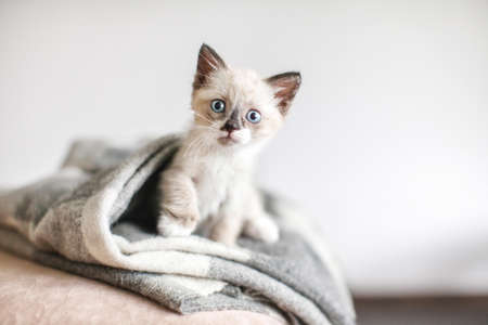 Cat on a white knitted blanket. Little cut kitten at home Zdjęcie Seryjne