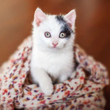 Kitten on a wooden floor. Little cut cat at home