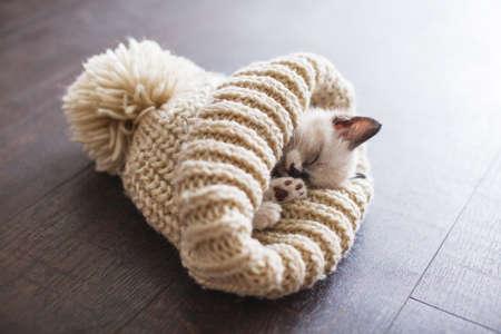 Kitten sleep in knitted hat. Little cut cat at home sleeping on floor