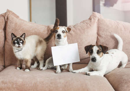 Cute dog and cat at home with empty blank card. Pets in living room on sofa