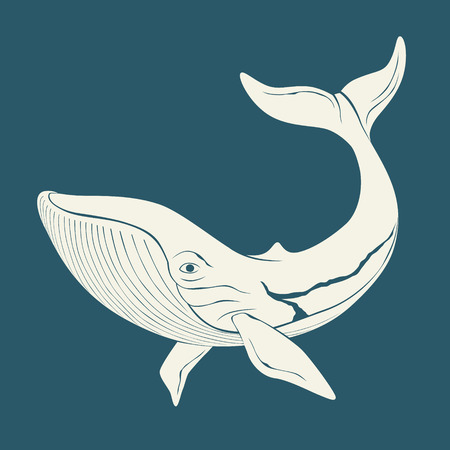 cachalot: Silhouette of whale. Illustration