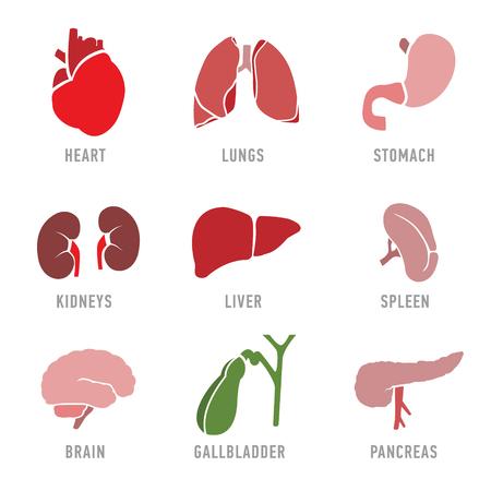 人間の臓器のアイコンを設定します。ベクトル