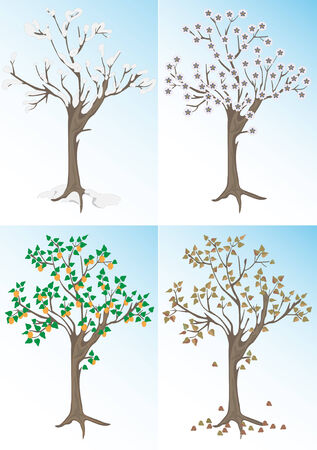 Apricot tree and the seasons.Background. Vector