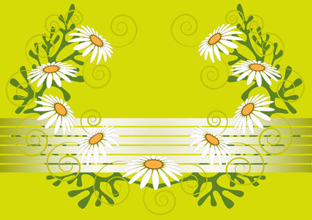 Greeting card with daisies on light green background. Vector