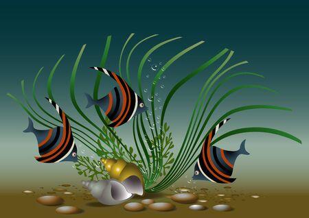 Exotic aquarium  fish with shells and plant  Illustration