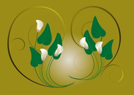 calas blancas: Callas blancas flores sobre un fondo verde