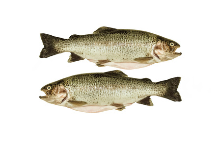 Two cleaned trout on white background ready to cooking photo
