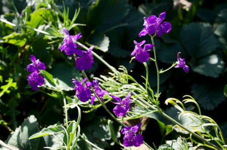 grew: Delicate purple flowers which grew in the grass