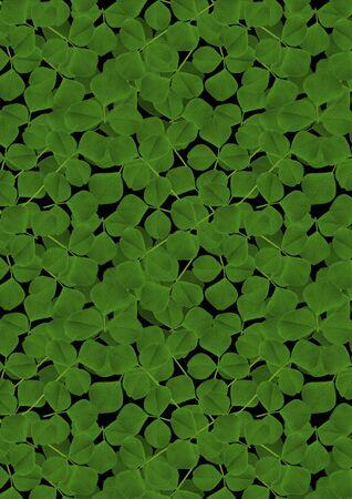 randomly: Background from the scattered randomly leaf clover