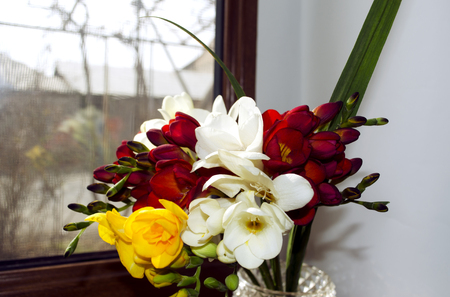 burgundy colour: Bright bouquet of odorous freesia in a crystal vase on a windowsill