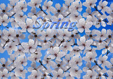 randomly: Randomly the scattered white plum blossoms against the blue sky