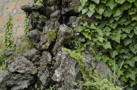 porous: The porous stone covered with moss and small violets Stock Photo