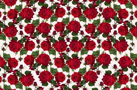 flower concept: Motley white background with red roses and buds
