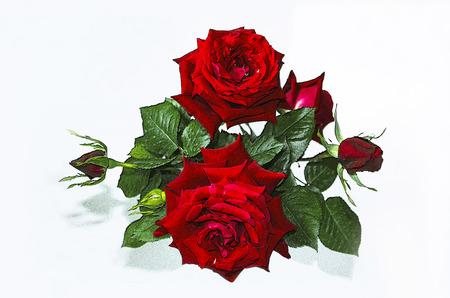 rosas rojas: Motley ramo de rosas rojas con brotes sobre un fondo blanco Foto de archivo