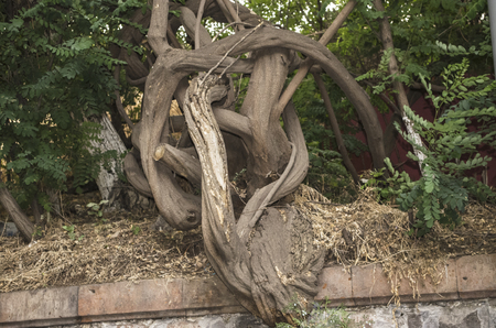 woodland sculpture: Fancifully bent and withered tree by the wayside