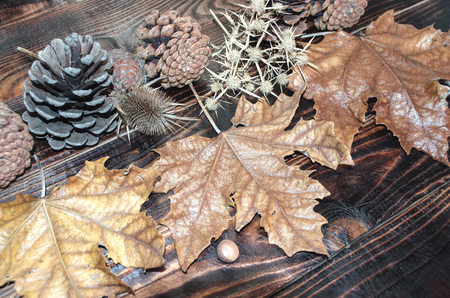 scorched: Dried leaves, prickle, pine cone on scorched dark planks