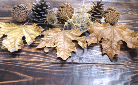 scorched: Pine cone, dried leaves, prickle  on scorched dark planks