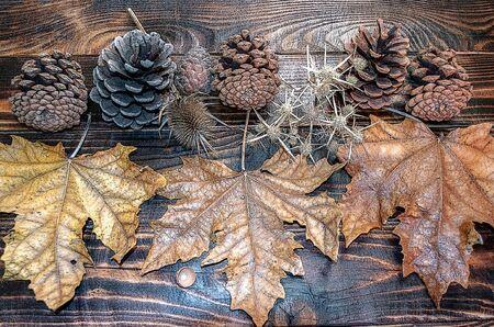 prickle: Autumn design leaves, prickle, pine cone on  dark planks